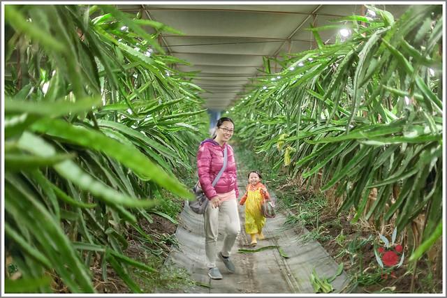 火龍果園星光野餐之找地瓜 烤地瓜 吃地瓜 (24)