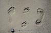 20180408 MARKGRAFENHEIDE (6).jpg (Marco Förster) Tags: dobermann hunde natur markgrafenheide ostsee strand frühling