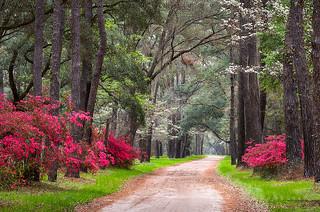 Deep South Lowcountry Lane Charleston South Carolina Edisto Island Scenic Landscape