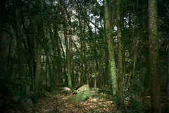 forest (Kenji Kitae) Tags: forest green tree wood mountain nature earth daily landscape location lifestyle lifework hiroshima japan