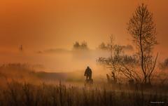 Landschaft - Heute Morgen (Pana53) Tags: photographedbypana53 pana53 naturfoto naturundlandschaftsfotografie nebel morgen biker radfahrer landschaft bäume wiese gras weg silhouette nikon nikond500 sonnenaufgang himmel baum feld