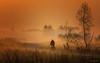 Landschaft - Nebel (Pana53) Tags: photographedbypana53 pana53 naturfoto naturundlandschaftsfotografie nebel morgen biker radfahrer landschaft bäume wiese gras weg silhouette nikon nikond500 sonnenaufgang himmel baum feld