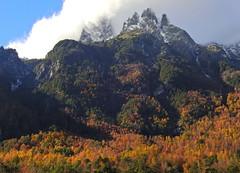 Otra del Peineta (Mono Andes) Tags: andes chile chilecentral regióndelaaraucanía otoño autumn cerropeineta bosque parquenacional parquenacionalvillarrica forest