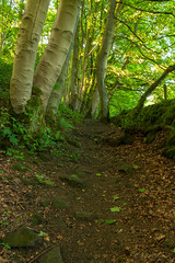Hollow Brook (DRWeaver) Tags: woodland trees summer landscape nature derbyshire outdoors peakdistrict eyam hollowbrook derbyshiredalesdistrict england unitedkingdom gb