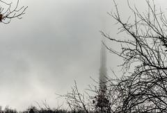 Cemetery  2 (Galduryndari D) Tags: saintpatrick tree tower cemetery parade rain fog reflection forest deformation surrealism