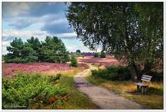 Sitzbank über dem Heidetal (Don111 Spangemacher) Tags: wolken wege himmel heidekreis heide heideblüte hochsommer farbenfroh urlaub lüneburgerheide landschaft niedersachsen natur naturschutzgebiet naturpark norddeutschland niederhaverbeck kulturlandschaft gras pflanzen