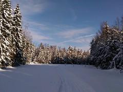 без снега на ветвях здесь серо и уныло