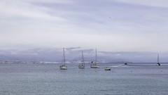 Vers Antibes (polfanice) Tags: baie bateaux voilier boat sea mer