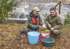 Matt Newton, lead scientist for the project, on right with trap (prajpix) Tags: salmon smolt juvenile fish wild invergarry river garry recording people person portrait measuring conservation ast ndsfb invernesshire highlands scotland freshwater water
