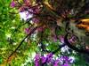 (FOTOS PARA PASAR EL RATO) Tags: pino hojas sunsent atardeceres arbol arboles flowers flores