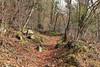 forêt qui sent bon (bulbocode909) Tags: valais suisse forêts arbres nature montagnes sentiers rochers feuilles troncs vert printemps