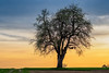 Spring is here... (New Views IV) (Ody on the mount) Tags: abendlicht anlässe bäume em5ii fototour himmel mzuiko4518 omd olympus pflanzen wolken clouds trees
