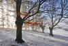 Fire & Ice (Hector Prada) Tags: forest bosque nieve snow trees arboles woods autumn otoño contraluz backlight atmósfera mood luz light magic mágico momento ephemeral enlightened euskalherria paísvasco basquecountry sky cold hot fire