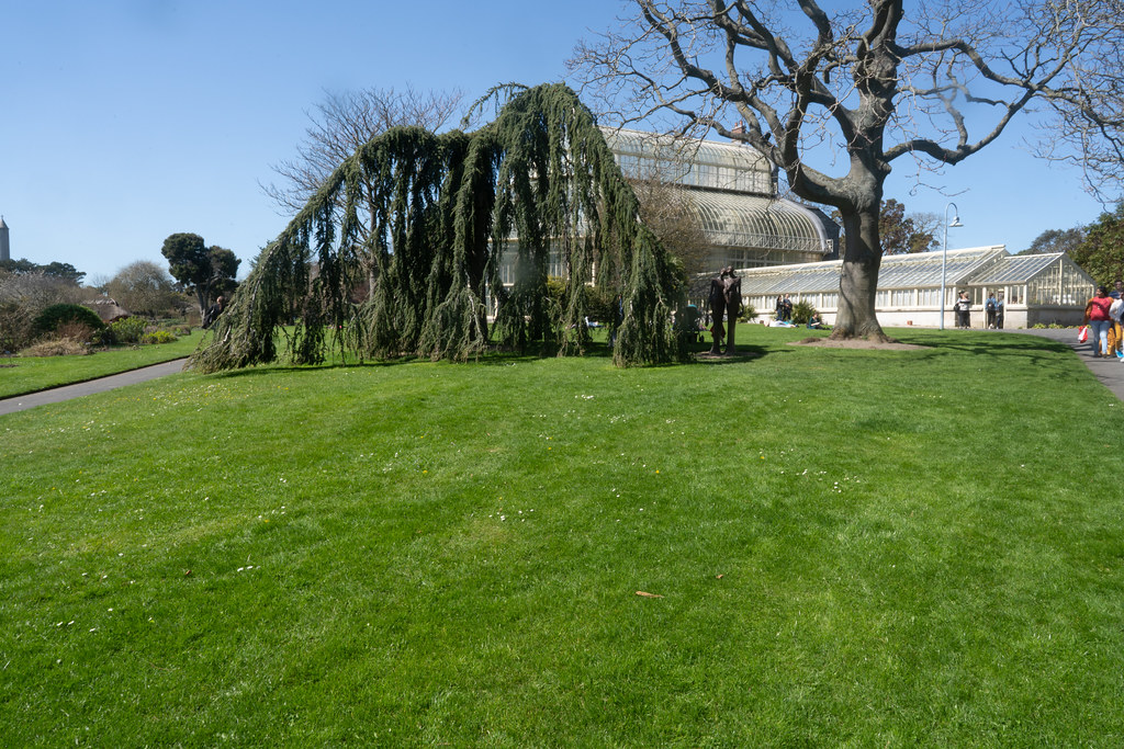VISIT TO THE NATIONAL BOTANICAL GARDENS [GLASNEVIN DUBLIN]-138523