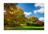 Autumn Colours - Kimbolton NZ (dominicscottphotography.com) Tags: dominicscott newzealand northisland kimbolton autumn trees colour sony gmaster ilce7rm3 sel1635gm a7rm3 a7rmiii breathtakinglandscapes