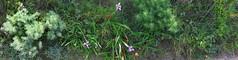 2018-03-3938-carmel-panorama-01.00 (Timothy Shea) Tags: panorama pointlobos