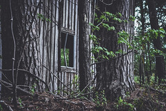 Desolate (trevormarron) Tags: abandoned desolate wooded tattered weathered fade structure building barn wooden