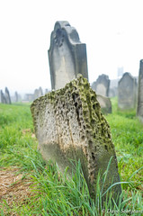 The Eroded Gravestone (daveseargeant) Tags: graves headstone graveyard whitby north yorkshire leica x typ 113 colour fog mist st hildas gravestone