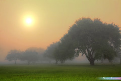 A Foggy Morning *A Beautiful Nature* (iLOVEnature's Photography Inspiration) Tags: abeautifulnature afoggymorning themortonarboretum fog foggy mist misty tree trees morning dawn sunrise sun forestreserved sunflare nature landscape macro lisle illinois us usa chicago