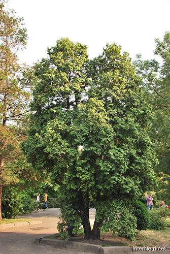 Київ, Ботанічний сад імені Фоміна Ukraine InterNetri 12