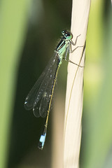 """demselfly2 • <a style=""""font-size:0.8em;"""" href=""""http://www.flickr.com/photos/157241634@N04/42063821875/"""" target=""""_blank"""">View on Flickr</a>"""