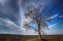 Осеннее небо (Sidorov Dmitriy) Tags: осень небо дерево природа украина autumn sky tree nature ukraine