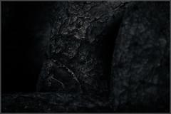 Old (p_v a l d i v i e s o) Tags: ef24105mmf4 cacti bark splittoning botanicalgarden blemish textures canoneos5dmarkiii monochrome moody dark periderm scales polarizingfilter black tree frame form organic 24105mm 5d3 canon5d canon5dmk3 canonef24105mmf4lisusm bw blackandwhite cactus monocromatico monocromatique monocromático lisboa portugal pt