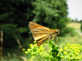 Butterfly 1687