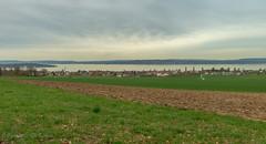 view of Lake Constance 2.)-2780 (dironzafrancesco) Tags: bottighofentg tamron gras tamronsp2470mmf28diusd slta99v sony münsterlingen thurgau schweiz ch