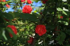 IMG_8331 (martaadves) Tags: people girls nature crimea sevastopol green flowers