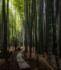 Stone road and bamboo (Andreas Mezger - Photography) Tags: stone road bamboo forest trees nature green freah air nikon