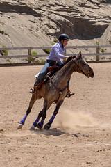 JBC_6527.jpg (Jim Babbage) Tags: krahc bethany appaloosa horses horseshow 2018