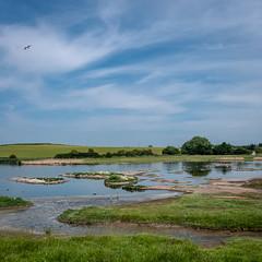 Upton Warren summer 4420 (Ruth Flickr) Tags: europe flashes midlands uptonwarren wwt worcestershirewildlifetrust worcestershireengland birds gulls reserve summer