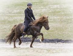Power (Anna.Andres) Tags: 03jún2018 sprettur félagsmót úrslit icelandichorses hestar horse stallion stóðhestur iceland íslenskihesturinn ísland annaguðmundsdóttir