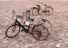 The bicycles - Angkor Wat (cattan2011) Tags: 柬埔寨 cambodia traveltuesday travelphotography travelbloggers travel streetpicture streetphoto streetphotography streetart bicycles landscapephotography landscape