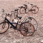 The bicycles - Angkor Wat thumbnail