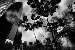 20180617 walk (soyokazeojisan) Tags: japan osaka walk sun sky flower tree green light street city people bw blackandwhite digital monochrome olympus em1markⅱ 714mm 2018