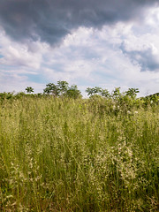 Clouds Rolling In (kgfamilyphotos) Tags: photo cloudysky kevingiles scenery grassyfield pic photography iphone7plus southernontario canada norfolkcounty oldstompinggrounds flickr field
