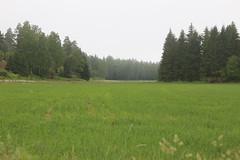 Deer in the distance (liisatuulia) Tags: porkkala dilojun2018