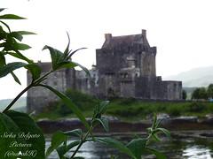 Landscapes Scotland (Sirka Delgato) Tags: scotland landscapes ecosse lochness glenfinnanviaduct glencoe fairypools skyeisland fortwilliam saintandrews edimbourg edinburgh glasgow inverness highland outlander highlander jamesbond samheugan catriornabalfe trip nature glanbrittle isleofskye paysages lacs loch glenlommond glenbrittle catriornabalfejamie frasertripnaturecotton grasschardonecosseisle skye cottongrass chardon
