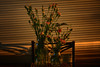 Long Shadows (flashfix) Tags: march252018 2018inphotos ottawa ontario canada nikond7100 40mm nikon flashfix flashfixphotography flowers carnations floral masonjar milkjug glass water shadows lines settingsun dusk stilllife