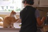I asked Sally to document this this morning (1 of 2) (rootcrop54) Tags: jimmy orange male tabby longhair helen interaction communication neko macska kedi 猫 kočka kissa γάτα köttur kucing gatto 고양이 kaķis katė katt katze katzen kot кошка mačka gatos maček kitteh chat ネコ tepco restaurantchina brands mug