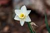Happy Easter (John H Bowman) Tags: virginia chesterfieldcounty home flowersandplants daffodilsjonquils jonquils springblossoms march2018 march 2018 canon1004004556l2 explore