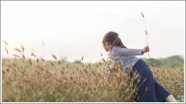 3月台南 親子寫真可以這樣拍 木棉花 蜀葵 小麥 一次讓你拍個夠 (72)