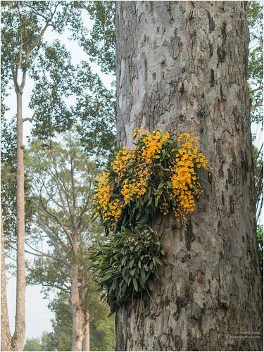 flower & tree