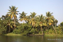 Kerala (Rolandito.) Tags: asia india inde indien karala backwaters lanscape river palm tree trees palms