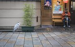 19032018-586A4929 (LIL Scarab) Tags: japan kyoto travel travelphotography picoftheday streetphotography bird realone man street notafraid canon canonphotography gion heron dontmove kanikauni shirakawa mikaku teppanyaki