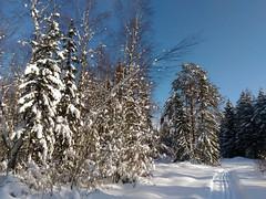 погода и лыжня - все за меня!