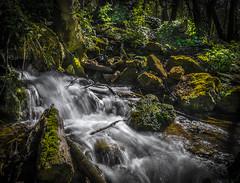 Rivière dans la forêt (joboss83) Tags: foret bois nature eau riviere wood