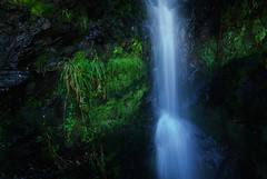 waterfall in green (trying to catch up again !!!) Tags: water waterfall green longexposure rotorua newzealand northernisland travel ivodedecker oceania